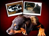 Maus-tratos aos animais – Caso Yorkshire, pet shop quatro patas e outros
